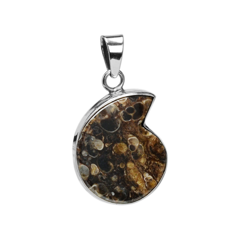 Extraordinary Turritella Agate With Fossil Snails! Sterling Silver Pendant