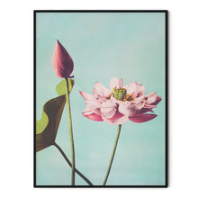 Load image into Gallery viewer, Lotus Flowers Poster - Ogawa Kazumasa