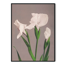 Load image into Gallery viewer, White Irises Poster - Ogawa Kazumasa