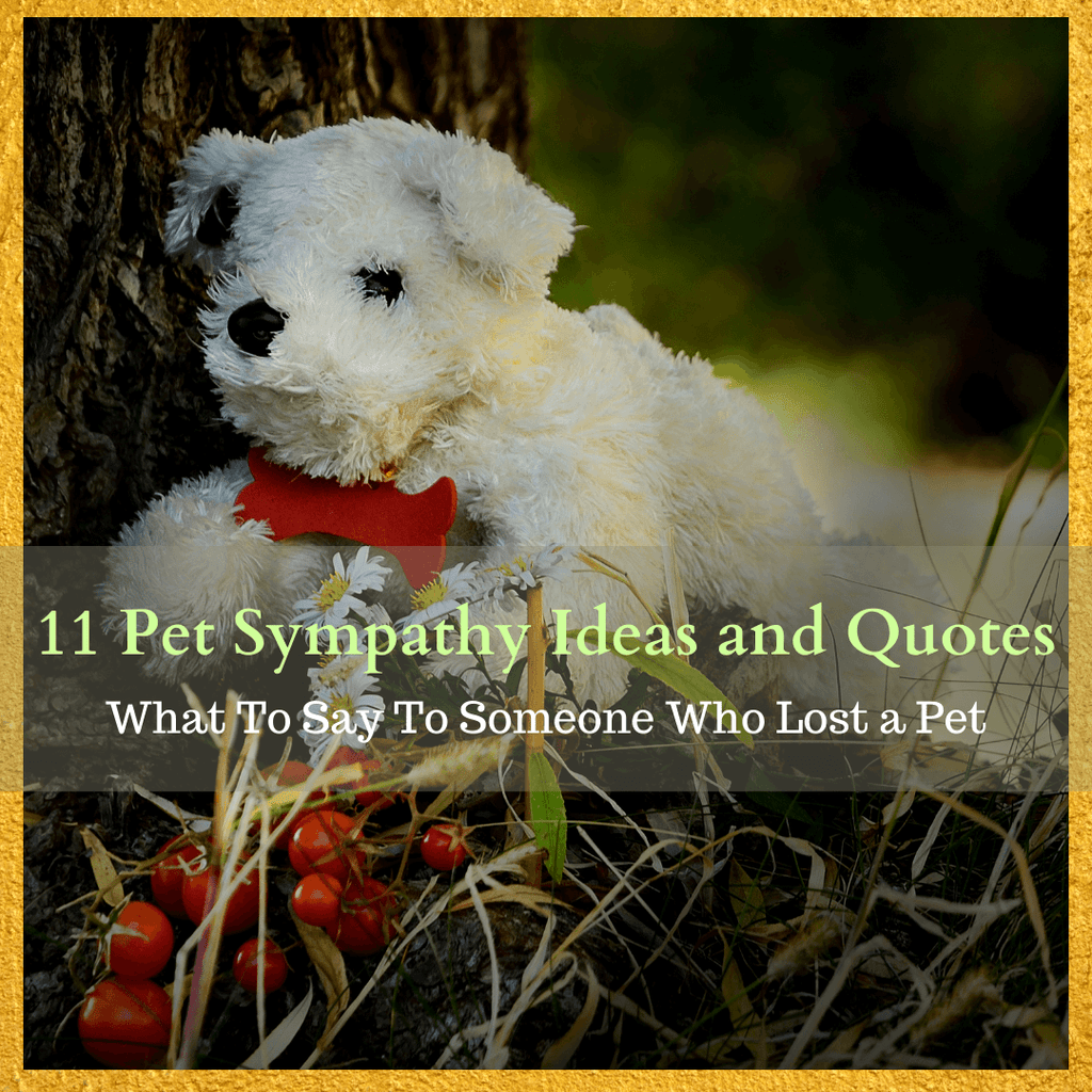 What To Say To Someone Who Lost a Pet - 11 Pet Sympathy Ideas and Quotes