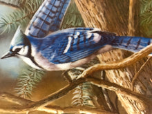 Load image into Gallery viewer, Collector Plate. The Blue Jay, by Kevin Daniels. 9-1/4""