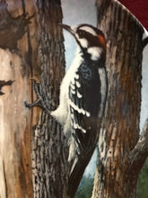 Load image into Gallery viewer, The Downey Woodpecker, by Kevin Daniels