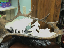 Load image into Gallery viewer, Moose Antler Carving by Angus Burns, Bull calling Cow    IN STORE PICK UP ONLY