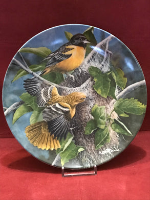 Collector Plate. The Baltimore Oriole, by Kevin Daniels. 9-1/4