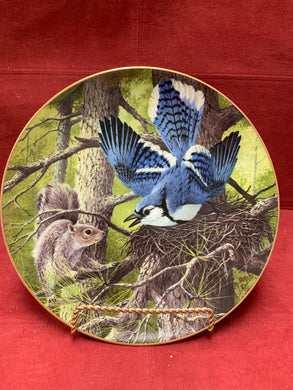 BlueJay-Protecting the Nest  by A J Rudisill