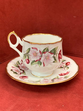 Rosina. England. Cup and Saucer. Burgundy and Pink Blossoms