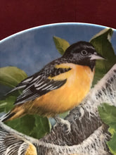 Load image into Gallery viewer, The Baltimore Oriole, by Kevin Daniels
