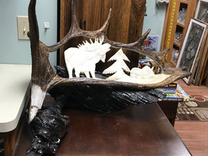 Moose Antler Carving by Angus Burns, Bull calling Cow    IN STORE PICK UP ONLY