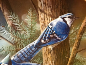 The Blue Jay, by Kevin Daniels