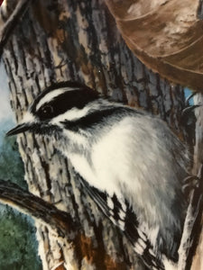 The Downey Woodpecker, by Kevin Daniels