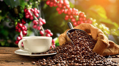 History of coffee: Coffee consumption by country