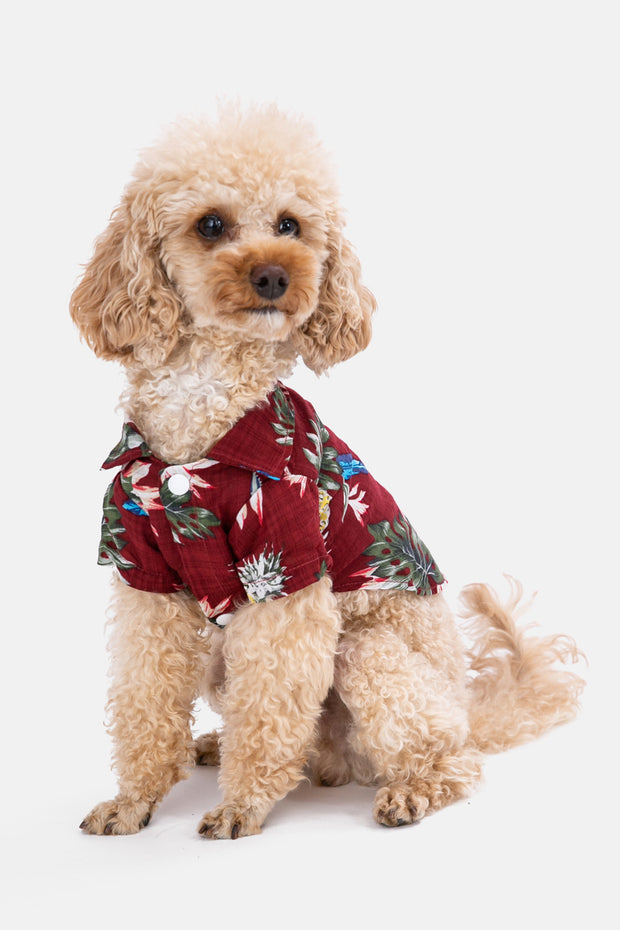 Island Button-Up Dog Shirt