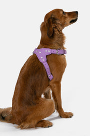 Glam-Dog Harness