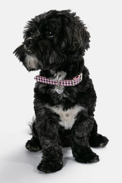 Checksy Dog Collar