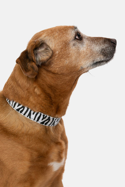 Zaney Dog Collar