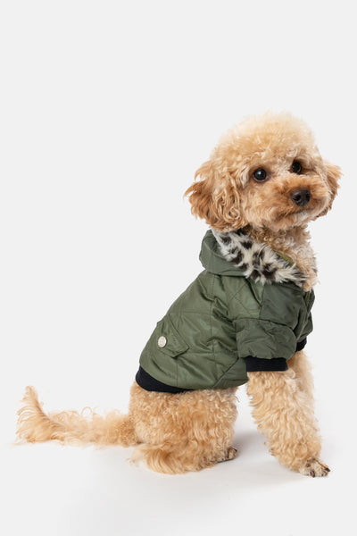 Winter Pup Hooded Coat