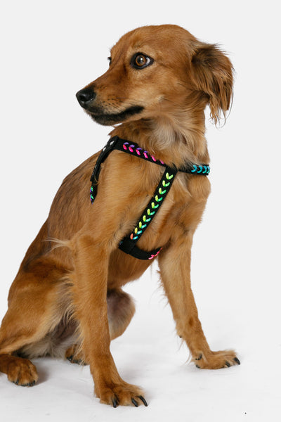Chella Dog Harness