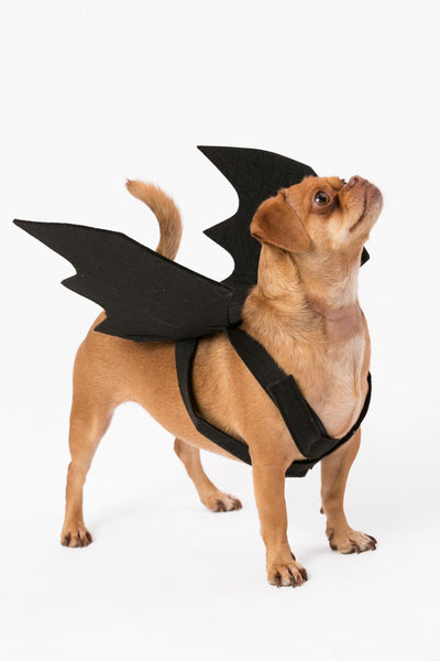 Bat-Dog Wings
