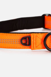 Foxy Reflector Dog Collar