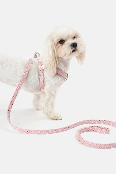 Daisy Harness