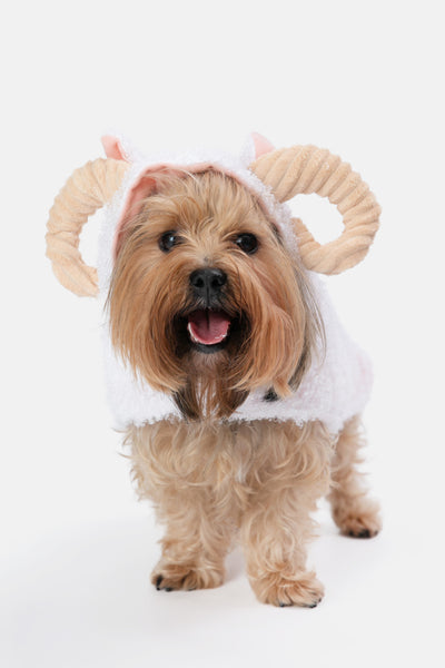 Capricorn Outfit for Dogs