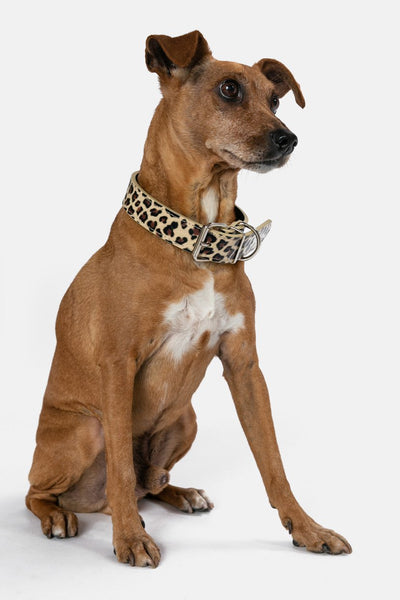Wildlife Dog Collar