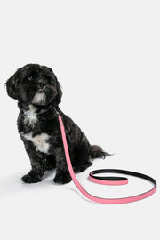 Baxter Dog Leash