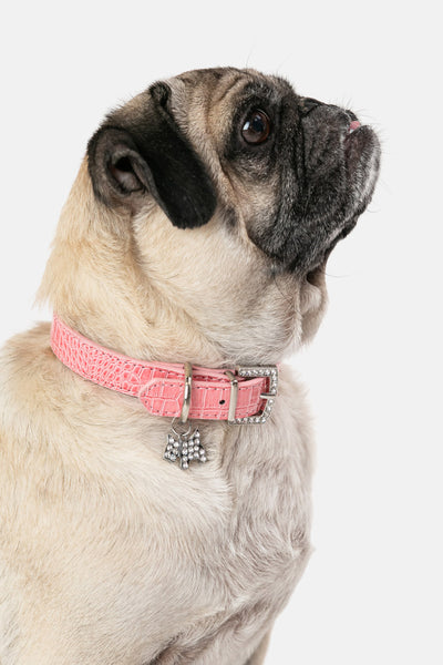 GLAM Dog Collar