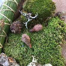 Load image into Gallery viewer, Wild-Crafted Moss found in Sierra Nevada Mountains (Berry Creek, CA) for Terrarium Fairy Garden Altar Craft