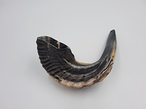 SALE Kosher Black Rams Ram Horn Natural Shofar From Israel Chofar Made in Israel size Between 16-18""