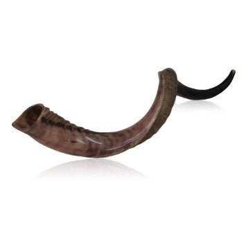 "31""-35"" Original Yemenite Shofar Kosher Polished Quality Israel Made Natural"