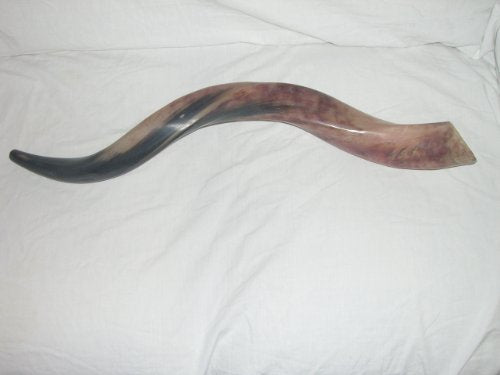 "50-59 Cm (20""-23"") Kudu Yemenite Horn Shofar Kosher All Polished New By Yaliland shofar"