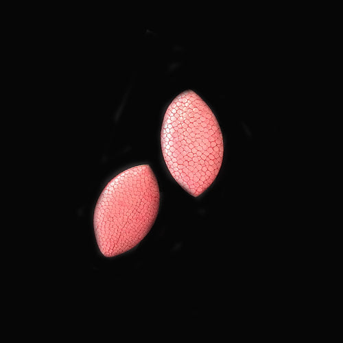 Coral Fish Leather Earrings - Nurit Niskala