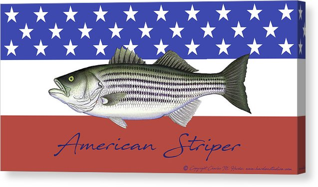 American Striper Patriotic Striped Bass - Canvas Print