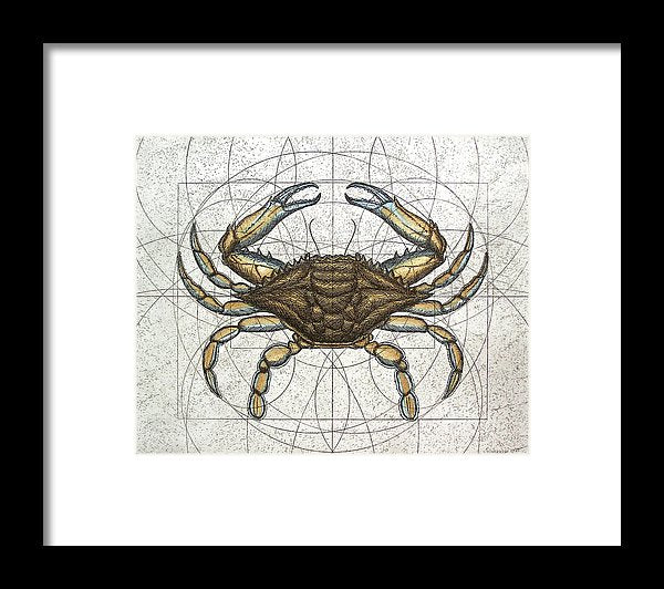 Blue Crab - Framed Print