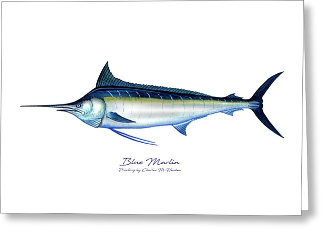 Blue Marlin - Greeting Card
