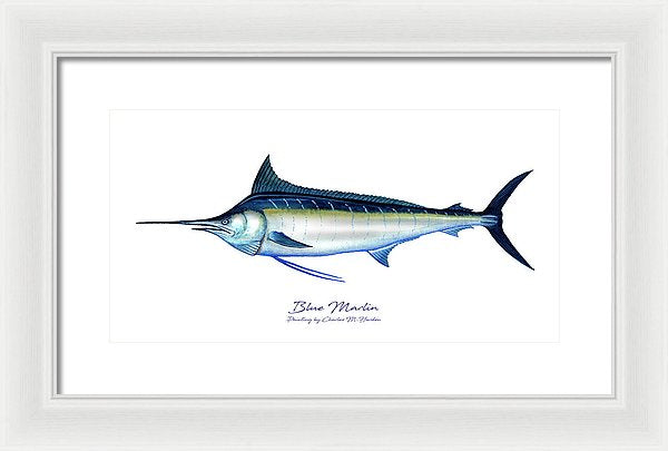 Blue Marlin - Framed Print