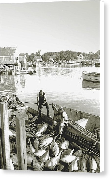 Bluefin Tuna At Barnstable Harbor - Canvas Print
