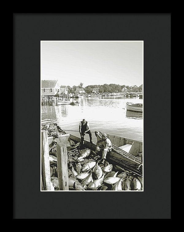 Bluefin Tuna At Barnstable Harbor - Framed Print