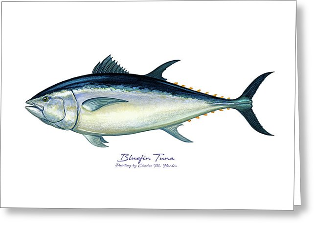 Bluefin Tuna - Greeting Card