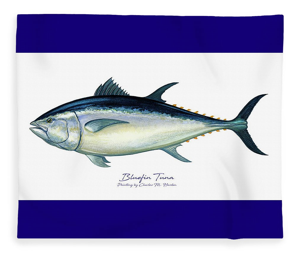 Bluefin Tuna - Blanket