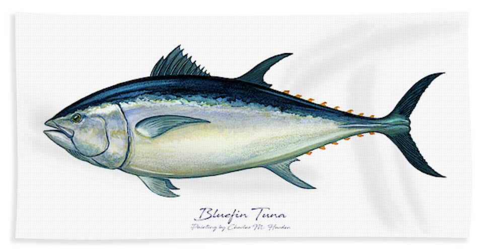 Bluefin Tuna - Beach Towel