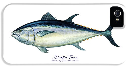 Bluefin Tuna - Phone Case