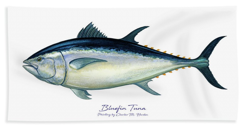 Bluefin Tuna - Bath Towel