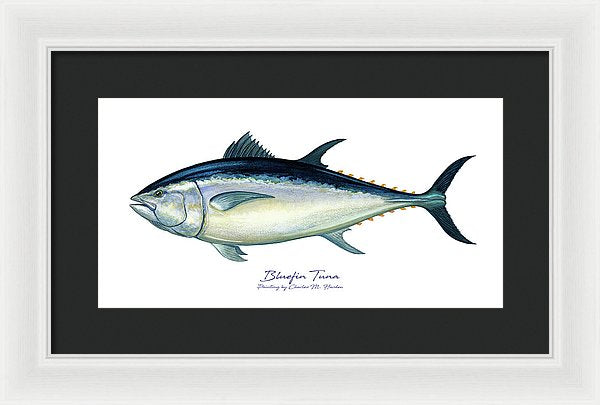 Bluefin Tuna - Framed Print