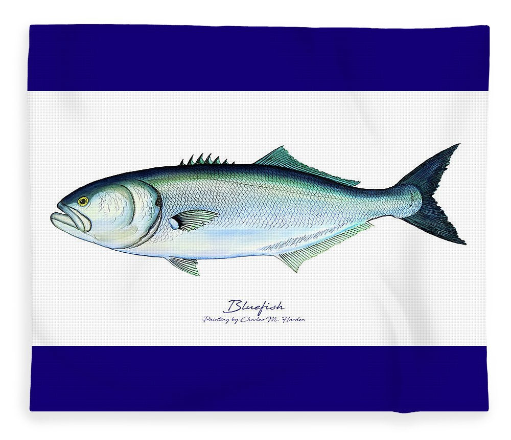 Bluefish - Blanket