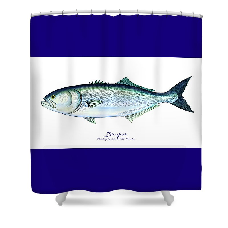 Bluefish - Shower Curtain