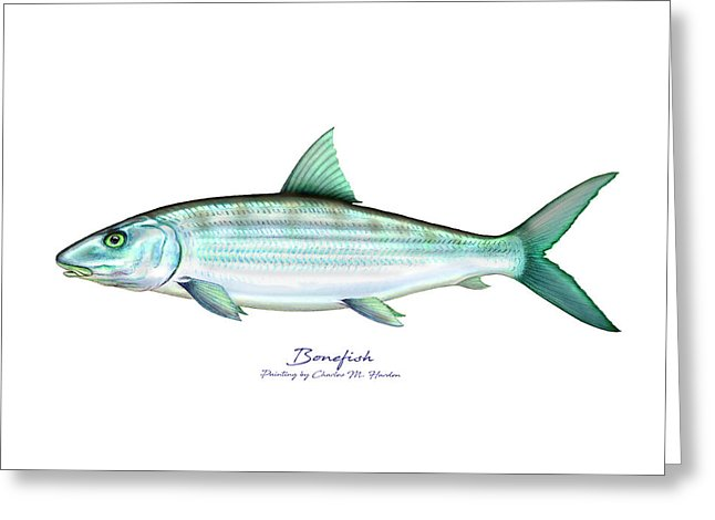 Bonefish - Greeting Card