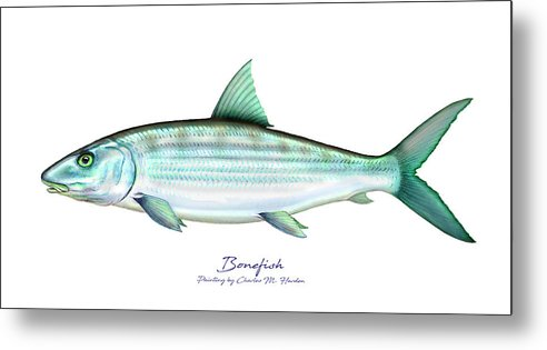Bonefish - Metal Print