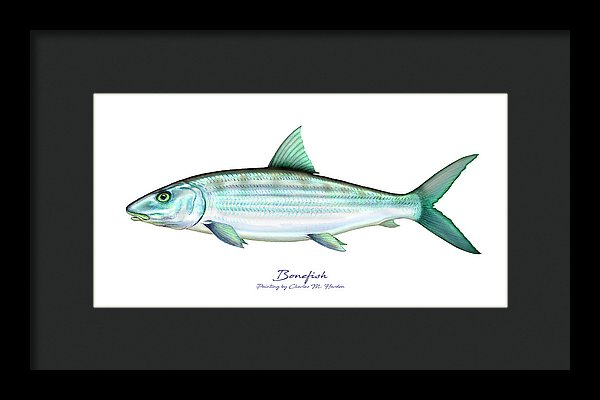 Bonefish - Framed Print
